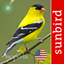 BirdSongId