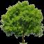 Tab Tree